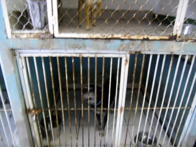 Existing cages at Amigos de los Animales