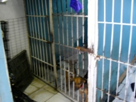 Existing cages at Amigos de los Animales