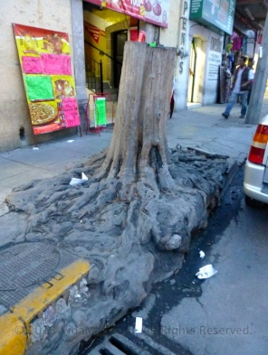 Very cool tree stump on a curb