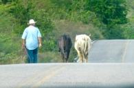 Heading into Cosalá