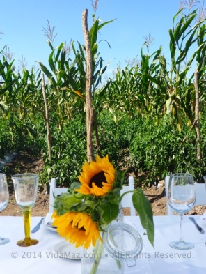 Eating in a field