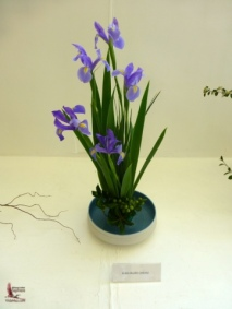 Ikebana flower arrangement—my favorite, irises (菖蒲)