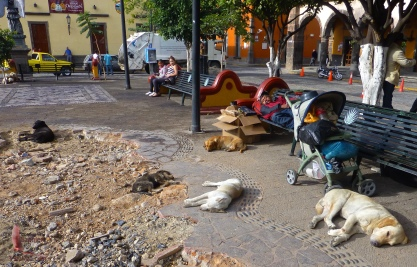 Man and dogs snoozing in the plaza