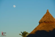 moon and palapa