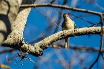 Dove (I think)