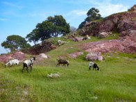 Goats, namesake of the hill